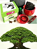 Premium Bonsai Growing Kit (Moreton Bay Fig) -CERAMIC Pot/Seeds/Soil/Liquid Fertilizer/Training Wire/Drainage whole cover/Extra Seeds/Gift Tag