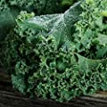 Kale Seeds - Heirloom Vates Blue Scotch Curled Non-GMO Fall Planting