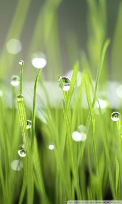 Amazon Com Waterdrop Wallpapers Appstore For Android