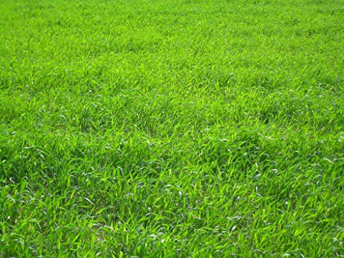 Nature's Seed TURF-LOPE-1500-F Perennial Ryegrass Seed Blend, 1500 sq.'.'
