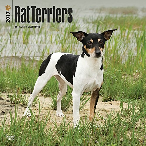Rat Terriers 2017 Wall Calendar