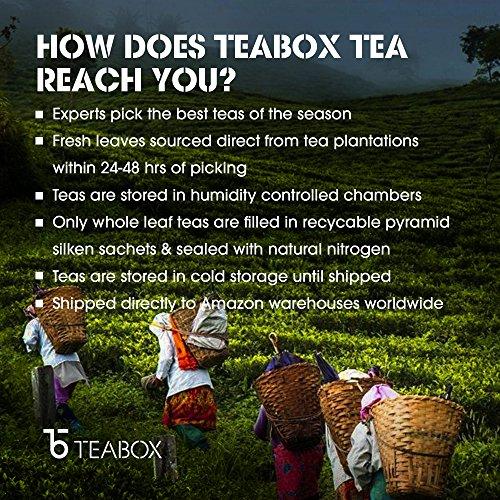 Teabox Darjeeling Silver Needle White Tea, 16 Tea Bags   100% Natural Premium High Altitude Darjeeling CTM Silver Needle Tea   Low Caffeine and High Anti-Oxidants   Sealed-at-Source Freshness by Teabox (Image #7)