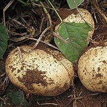 HOO PRODUCTS - Sweet potato Seeds, jicama / yam bean seeds, garden fruits and vegetables seeds 6pcs Brand New !