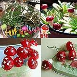 20pcs Mini Red Mushroom Garden Ornament Miniature Plant Review and Comparison