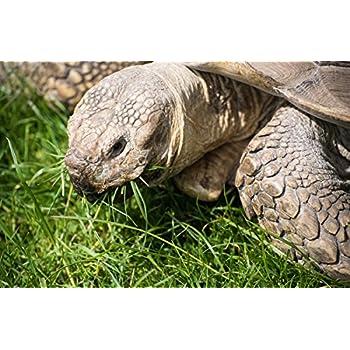 Amazon Com Broadleaf Tortoise Forage Blend 200 Seeds