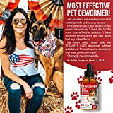 DEW0RMER for Dogs & Cats (2 OZ) - Treat & Prevent - Broad Spectrum WHIPW0RM, H00KW0RM, R0UNDW0RM & TAPEW0RM DEW0RMER - Made in USA - Natural Powerful Blend - Senior Pets, Kitten & Puppy DEW0RMER