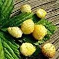 Alpine Strawberry Wild Yellow Seeds Everbearing Vegetable for Planting Giant Non GMO 100 Seeds