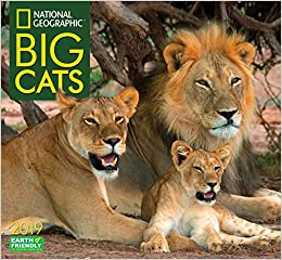 national geographic big cats 2019 wall calendar