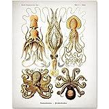 Antique Octopus Print - 11x14 Unframed Art Print - Great Wall Decor