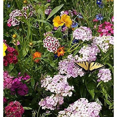 David's Garden Seeds Flower Butterfly Mix SL5331 (Multi) 500 Non-GMO, Open Pollinated Seeds : Garden & Outdoor