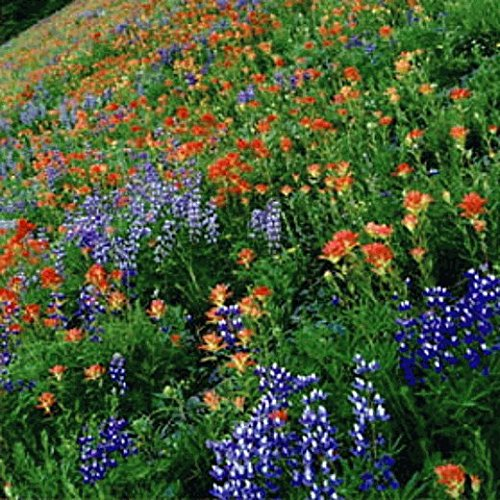 Southeast Wildflower Seed Mix - 5 Lb by The Vermont Wildflower Farm (Image #2)