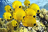CHOIS Custom Films CF3048 Animal Yellow Fishes Corals Ocean Glass Window Frosted 4' W by 3' H
