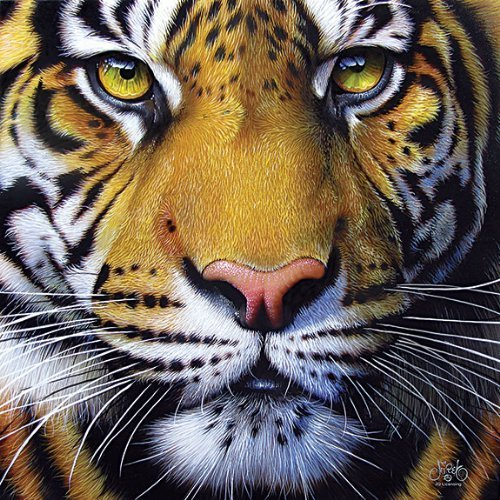 Golden Tiger Face a 1000-Piece Jigsaw Puzzle by Sunsout Inc. Inc. Inc. by SunsOut e66003