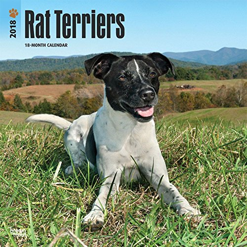 Rat Terriers 2018 Wall Calendar