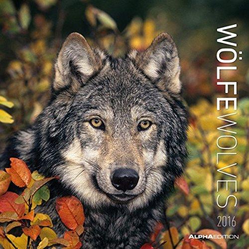 wlfe-2016-wolves-broschrenkalender-30-x-60-geffnet-tierkalender-wandplaner