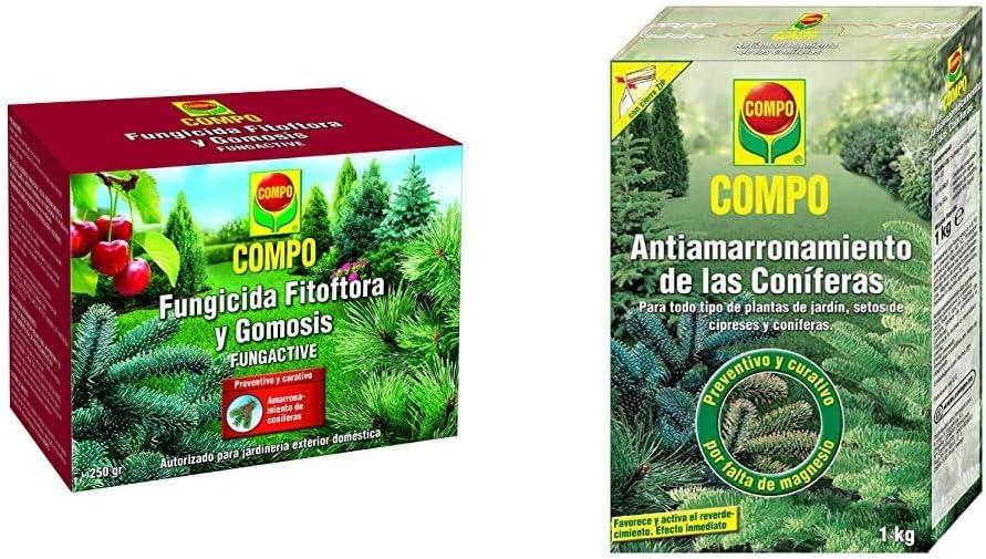 Compo Fungicida Fitóftora y Gomosis, Preventivo y curativo, Apto para jardinería exterior doméstica, Polvo soluble, 250 gr + Antiamarronamiento de coníferas de larga duración