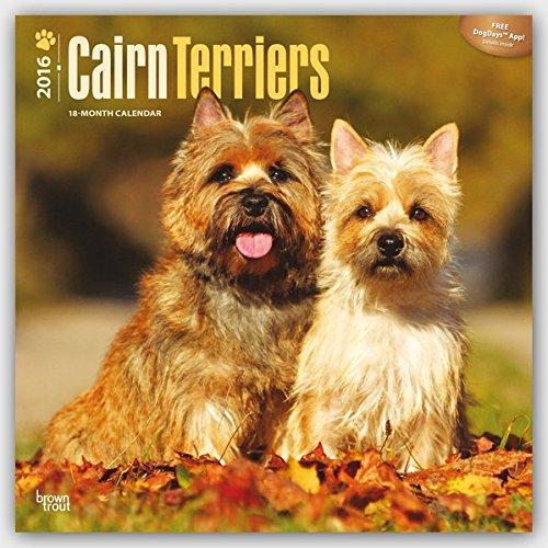 Cairn Terriers 2016 - Cairn Terrier - 18-Monatskalender mit freier DogDays-App: Original BrownTrout-Kalender [Mehrsprachig] [Kalender] (Wall-Kalender)