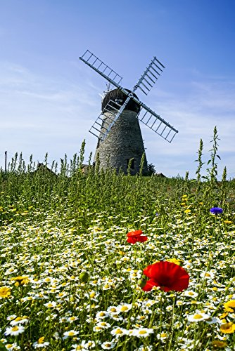 A windmill against a blue sky and cloud with a field of wildflowers in the foreground Whitburn Tyne and Wear England Poster Print by John Short Design Pics (22 x 34)