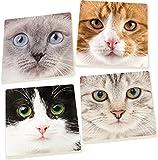 Cat Faces 5 x 5 Super Absorbent Ceramic Coasters, Set of 4
