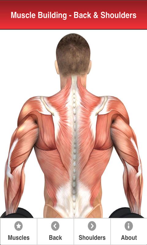 Amazon Backshoulders Muscle Building With Craig Ramsay