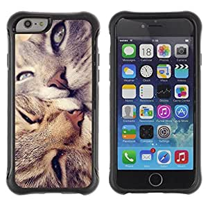 LASTONE PHONE CASE / Suave Silicona Caso Carcasa de Caucho Funda para Apple Iphone 6 / American Shorthair Curl Cats Kiss Love