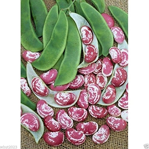 Christmas Lima beans (pole)100 Seeds,Heirloom date to the 1840s, Non-Gmo ()