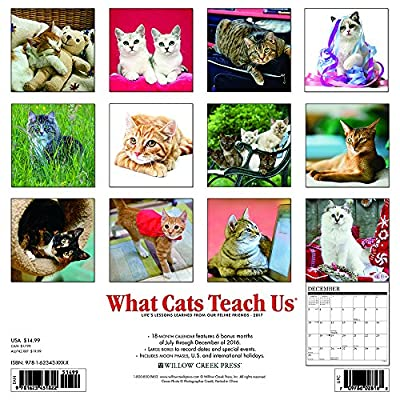 2017 What Cats Teach Us Wall Calendar