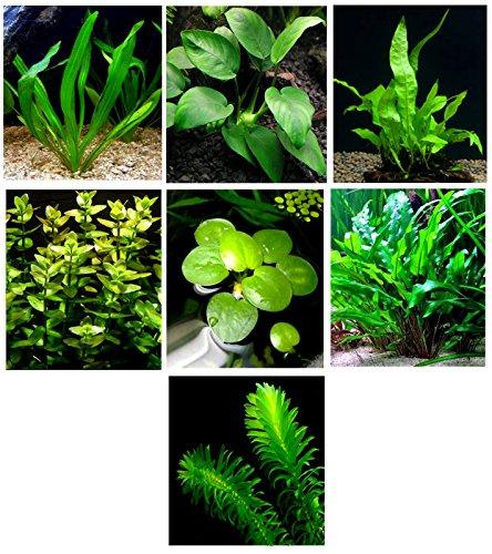Aquatic Plant - 9