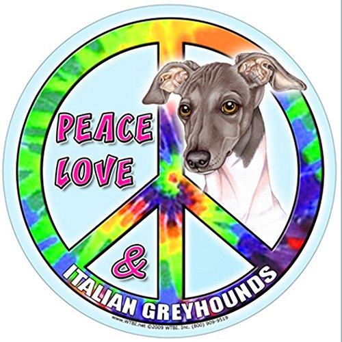 (Italian Greyhound 5