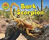 Bark Scorpion (Desert Animals Searchin' for Shade)