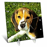 3dRose Beagle, Dog, Puppy, Animal, Pet - Desk Clock, 6 by 6-inch (dc_215176_1)