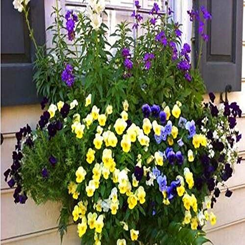 Las flores bonitas semilla rara que cuelga de la capuchina planta Semillas Flores del jardín de flores Semillas de plantas colgantes 20pcs: Amazon.es: Jardín