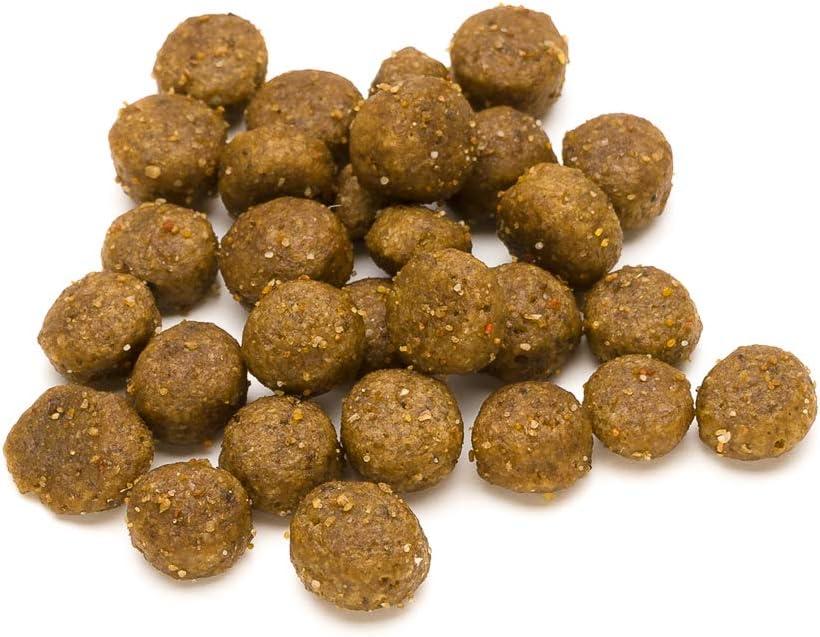 Marca Amazon - Lifelong Complete- Alimento seco completo para perros (razas pequeñas) con salmón y arroz, 1 x 10 kg