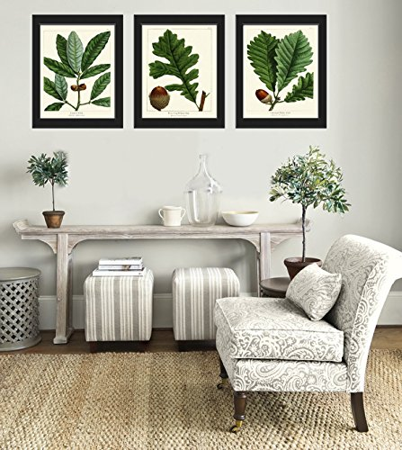 botanical-print-set-of-3-antique-beautiful-redoute-acorn-tree-branch-green-leaf-nuts-forest-nature-h