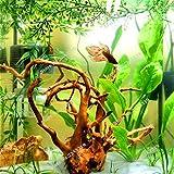 1000 Pcs/bag Fern Moss Live Aquarium Plants Seeds Fish Tank Background Aquatic Indoor Ornamentals Hot Sale