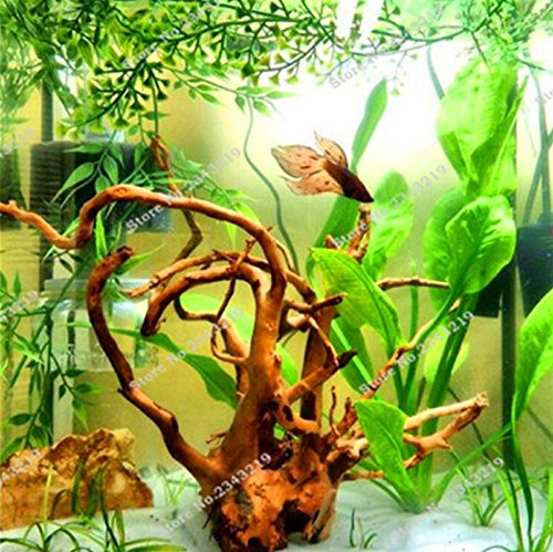 1000 Pcs/bag Fern Moss Live Aquarium Plants Seeds Fish Tank Background Aquatic Indoor Ornamentals Hot Sale (Aquarium Dvd Background)