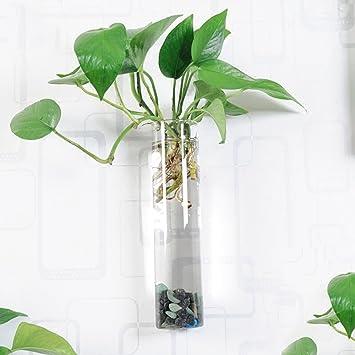 Moilyn- European Unique Creative - Planta hidropónica montada en la pared - Florero de vidrio transparente - Tema bricolaje - Pecera ...