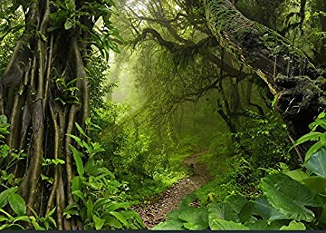 amazon com 7x5ft jungle safari tree forest foliage photography
