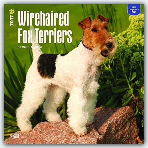 Fox Terriers - Foxterrier 2017-18-Monatskalender mit freier DogDays-App: Original BrownTrout-Kalender [Mehrsprachig] [Kalender] (Wall-Kalender)