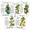 Assortment of 5 Individual Winter Squash Seed Packets (Cucurbita pepo) Non-GMO Seeds by Seed Needs