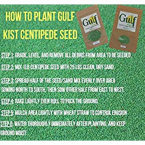 Centipede Grass Seed Mix for a Dense Green Lawn, 1 lb Coated Seeds, Sun and Moderate Shade Tolerant Lawn Seeding and Turf Patch Repair, Southern Southeast US, Low Fertilizer Low Maintenance No Mulch