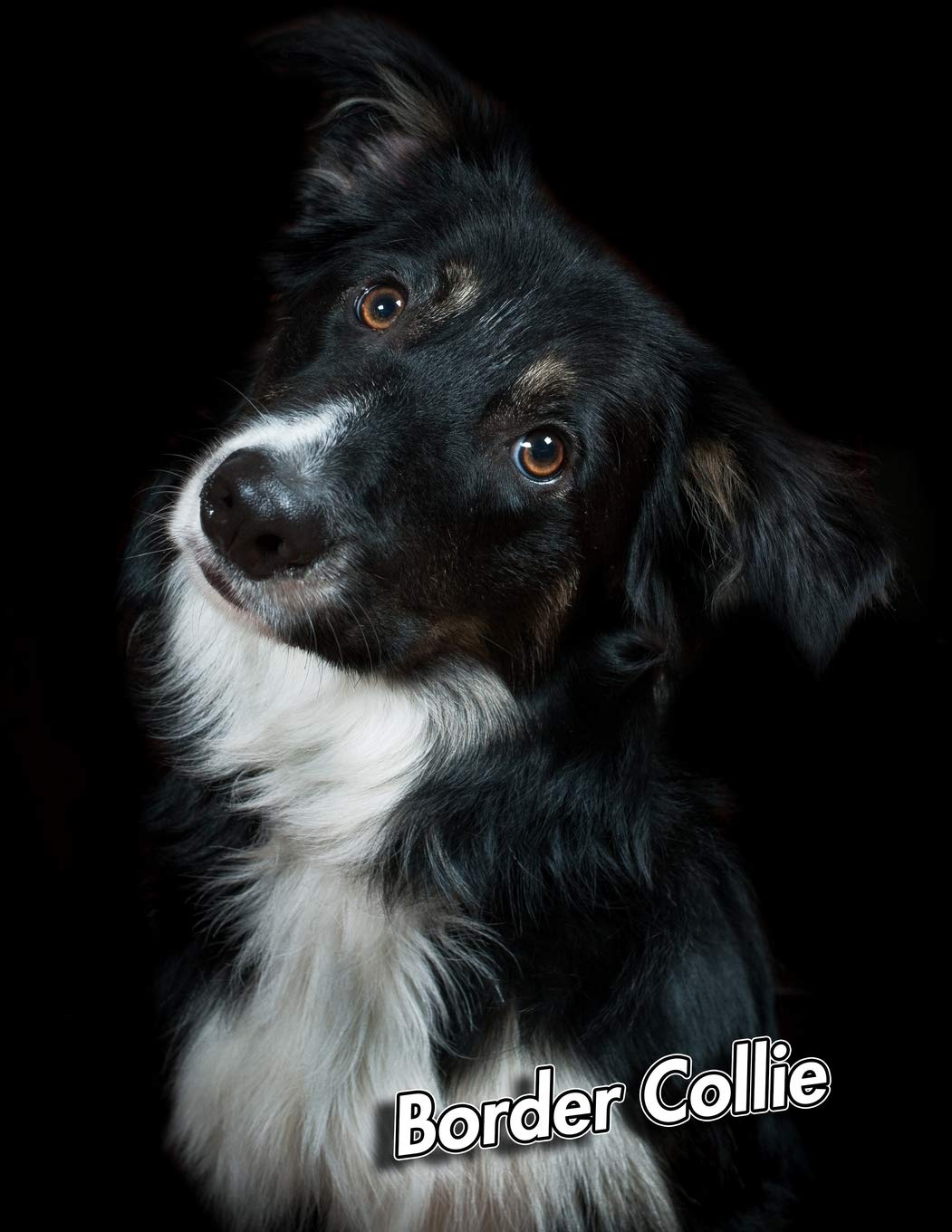 Border Collie: 2020 Weekly Calendar | 12 Months | 107 pages ...