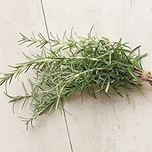 David's Garden Seeds Herb Rosemary SL932BF (Green) 200 Open Pollinated Seeds