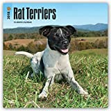 Rat Terriers 2018 12 x 12 Inch Monthly Square Wall Calendar, Animals Dog Breeds Terriers (Multilingual Edition)