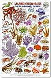 Marine Invertebrates - Florida, The Bahamas & Caribbean ID card