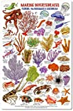 fishcardscom Marine Invertebrates - Florida, The