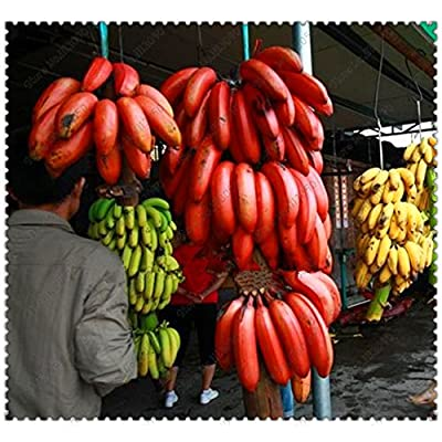 200pcs/bag rare red banana seeds bonsai fruit & vegetable seeds no-GMO potted plant for home & garden : Garden & Outdoor