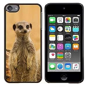 YiPhone /// Prima de resorte delgada de la cubierta del caso de Shell Armor - Lindo Cordero - Apple iPod Touch 6 6th Touch6