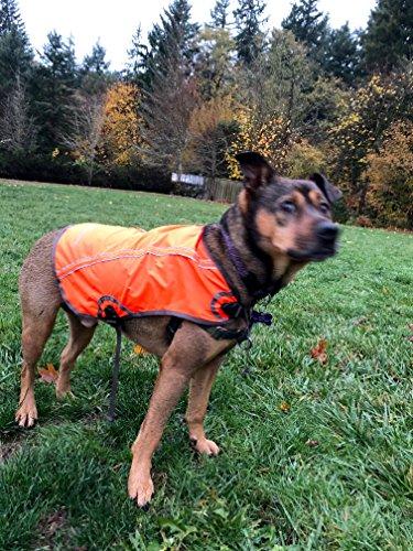 Ollydog Dog Pack - OllyDog Dog Vest - Night Vis Reflective Orange (Medium)