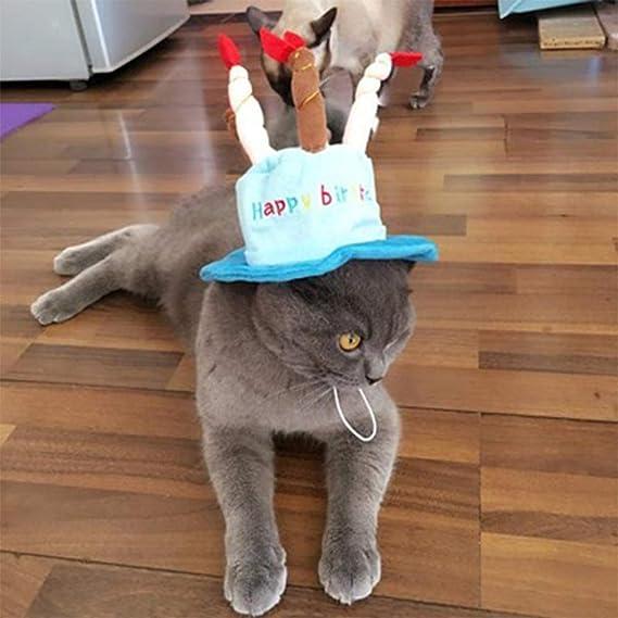 AZXAZ - Sombrero de cumpleaños para Mascota, diseño de Gato ...